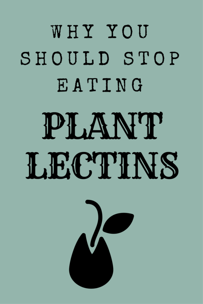 An in-depth look at plant lectins and how they wreak havoc on the human body.