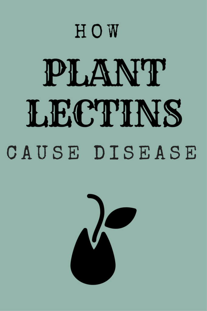 An in-depth look at how plant lectins cause disease in the human body.