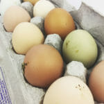 Pastured eggs on the Plant Paradox diet